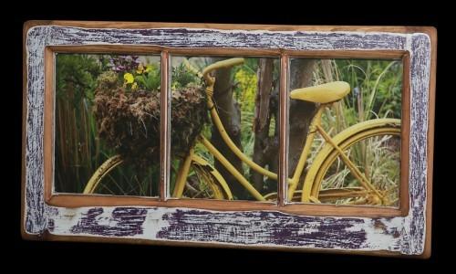 Salt Springs Bicycle (1)