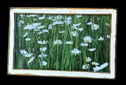 Daisies (4) - Click image to view product info