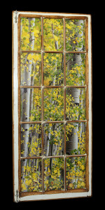 Aspen Leaves (1) - Click Image