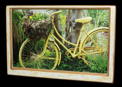 Salt Spring Bicycle (2) - Click Image