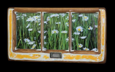 Daisies (5) - Click Image