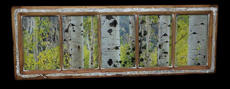 Aspen Trees (2) - Click Image